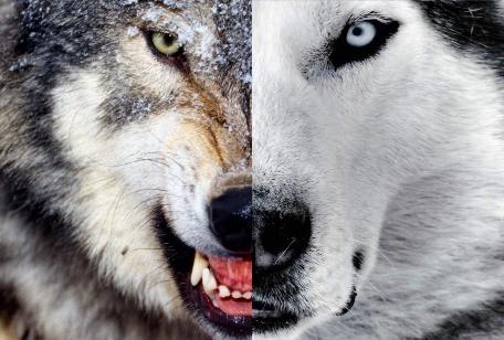 lobo pessoas